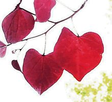 THE HEART LEAVES by alli royce soble