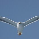 Seagull-2 by DutchLumix