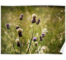 Tweed Thistles Poster