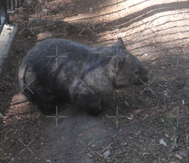 Wally Wombat by KazM