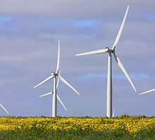 Windfarm by Marcus Singline
