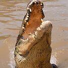 Saltwater Crocodile on the Adelaide River by Erik Schlogl