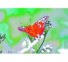 butterfly # 3 Photographic Print