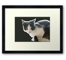 A Max And Mantle Bi Colour Cat Isolated Framed Print