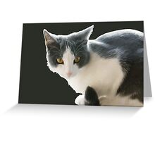A Max And Mantle Bi Colour Cat Isolated Greeting Card