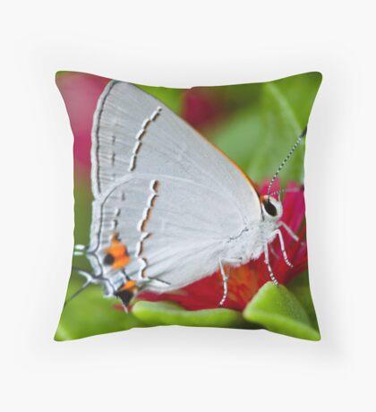 Gossamer Winged Butterfly Throw Pillow