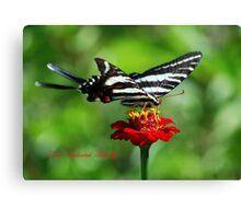 Zebra Swallowtail on a Red Zinnia Canvas Print