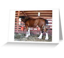 White Socks Draft Horse Greeting Card