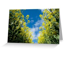 The Rape Seed Fields Greeting Card