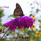 Monarch Butterfly on a Butterfly Bush by Catherine Sherman