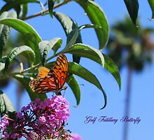Gulf Fritillary Butterfly in California by Catherine Sherman