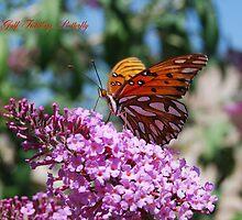Gulf Fritillary Butterfly by Catherine Sherman