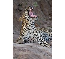 Teeth of the leopard Photographic Print