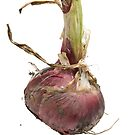 Red Onion by Marlene Hielema