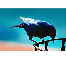 A Starling Photographic Print