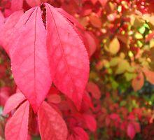 Autumn Rainbow by Jess Mo