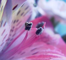 flower 1 by mandi615