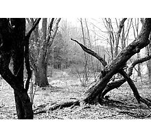 Twisted Woods in NJ Photographic Print