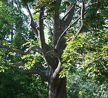 Climbing tree by warmchocmilk