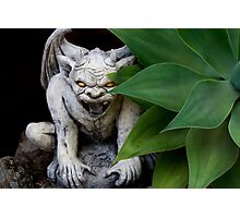 garden guardian Photographic Print