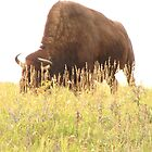 The Grass is Belly High on a Tall Buffalo by eltotton