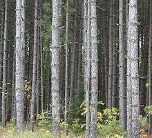 Pine Forrest by warmchocmilk
