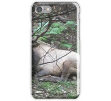 Pennsylvania Wild Elk iPhone Case/Skin