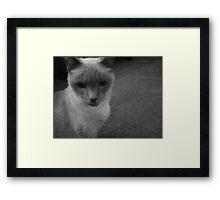 Existentialism of Catnip Framed Print
