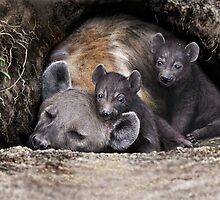 SPOTTED HYAENA 8 by DilettantO