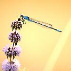 Blue Damselfly #2 by Allan  Erickson