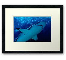 the shark Framed Print