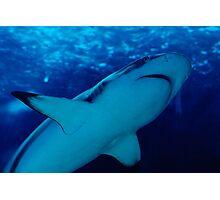the shark Photographic Print