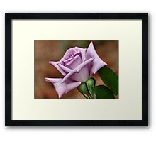 The 'BLUE MOON' a rose with exceptional beauty and elegance ! Framed Print