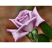The 'BLUE MOON' a rose with exceptional beauty and elegance ! Photographic Print