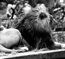 King of the Zoo.. by stellaozza