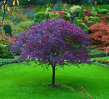 Butchart Gardens 30 by James Birkbeck