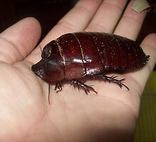 Big Cockroach by Thow's Photography