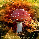 Myfirst amanita muscari... by satterflOw