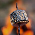 Toasted Marshmellow-Parkerville WA by becgrazz