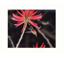 Coral Tree Nectar Art Print