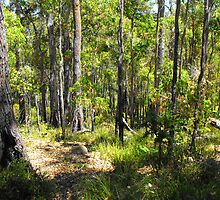Tall Timbers by Julia Harwood