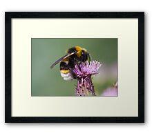 Cuckoo Bee Framed Print