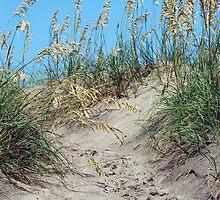Sand Dunes by Carol Knepp
