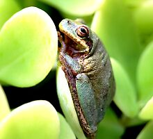 Tree Frog by Carol Knepp