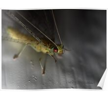 Macro Of A Lace Wing Poster