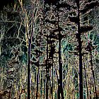 Forest Night Vision  by Rabecca Primeau