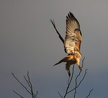 Hawk After It's Prey by Richard Skoropat