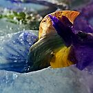 Iced Iris... by Patriciakb