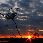 Sunset Weed by Richard Skoropat