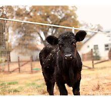 Junior's first day at the sanctuary Photographic Print